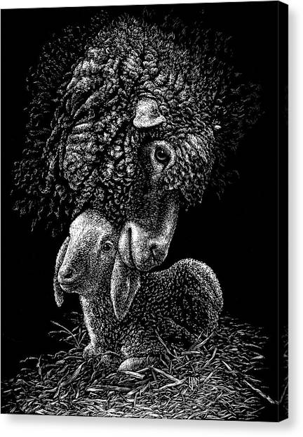 Canvas Print featuring the drawing Lamb by Clint Hansen
