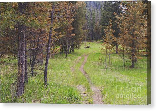 Woodland Canvas Print - Landscape Image Of Hiking Trail In The by Brian A Smith