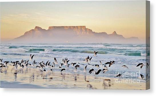Seagull Canvas Print - Landscape With Beach And Table Mountain by Werner Lehmann