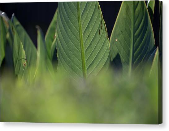 Large Dark Green Leaves Canvas Print