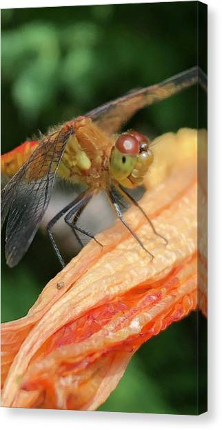 Larry The Dragonfly Canvas Print