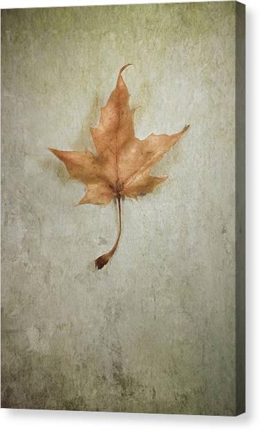 Amber Canvas Print - Last Days by Scott Norris