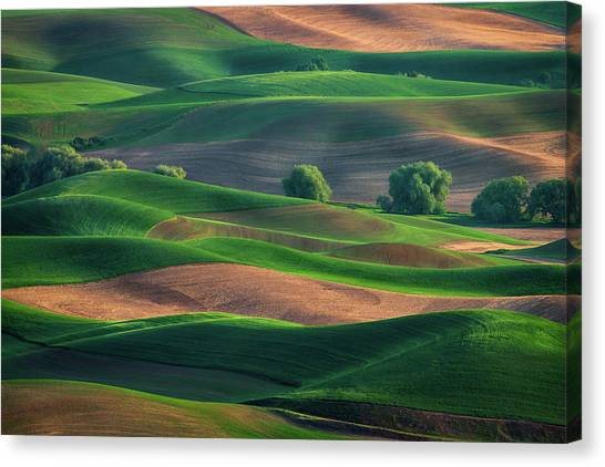 Late Afternoon In The Palouse Canvas Print