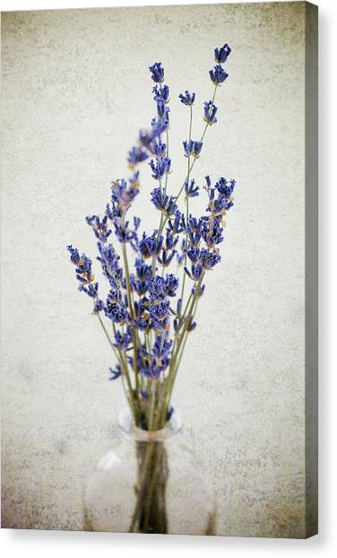 Canvas Print featuring the photograph Lavender by Nicole Young