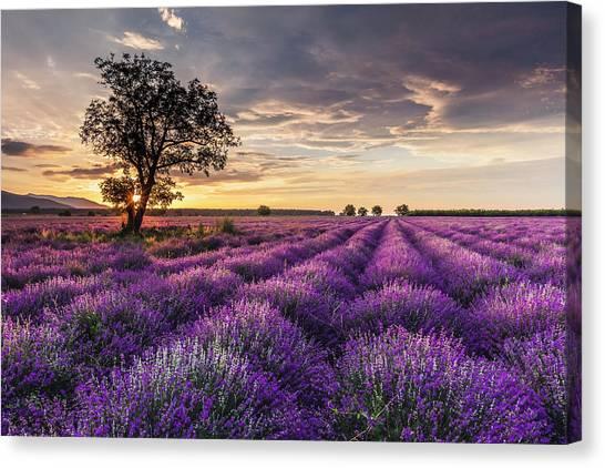 Lavender Sunrise Canvas Print