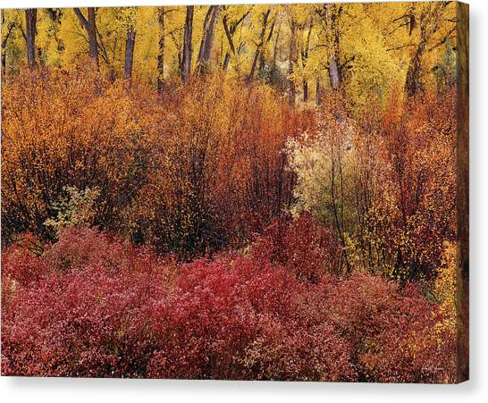 Layers Of Color Canvas Print by Leland D Howard
