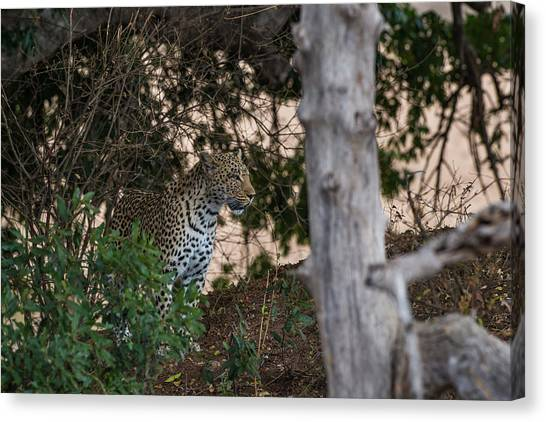 Canvas Print featuring the photograph LC1 by Joshua Able's Wildlife