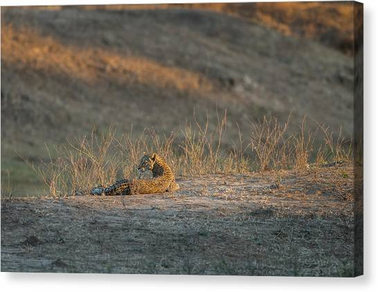 Canvas Print featuring the photograph Lc10 by Joshua Able's Wildlife
