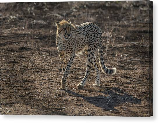 Canvas Print featuring the photograph LC3 by Joshua Able's Wildlife