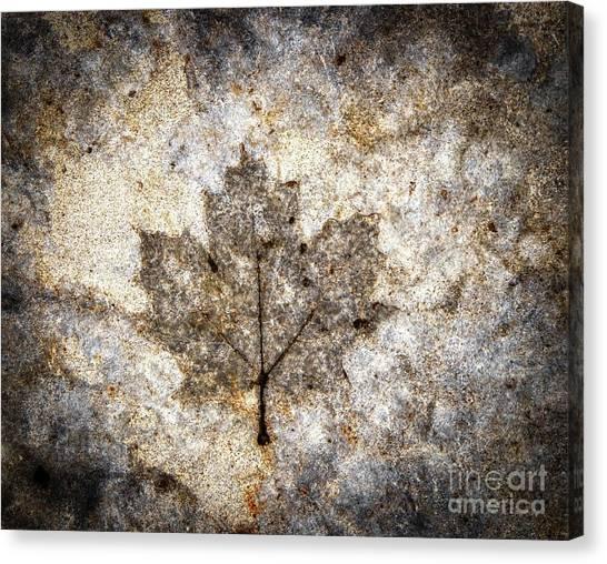 Leaf Imprint Canvas Print