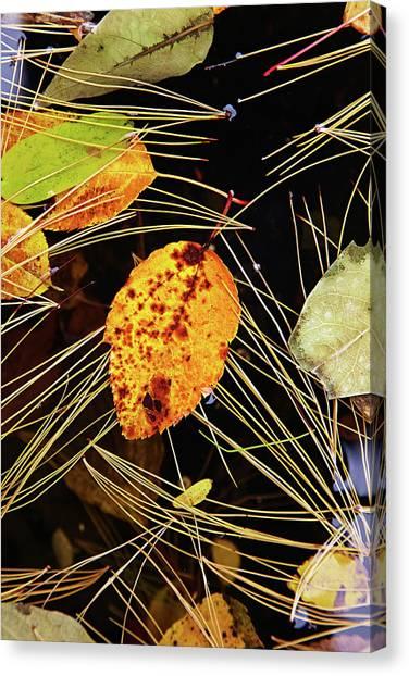 Leaf In Pond Canvas Print