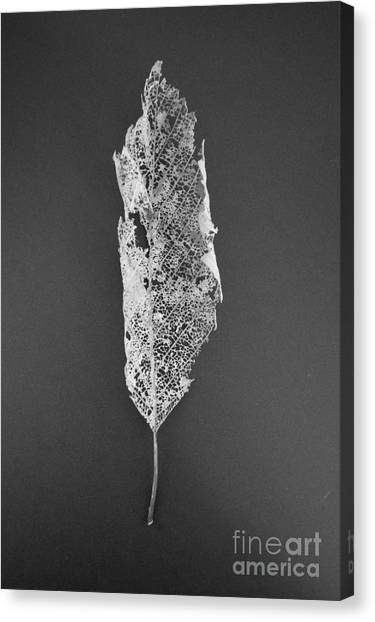 Canvas Print featuring the photograph Leaf Skeleton Red Filter by Jeni Gray
