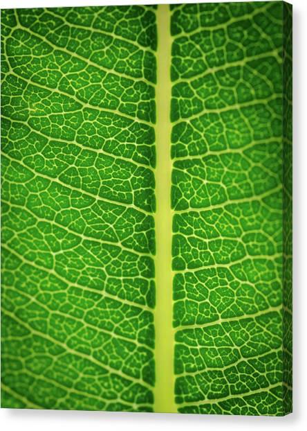 Leafy Detail Canvas Print