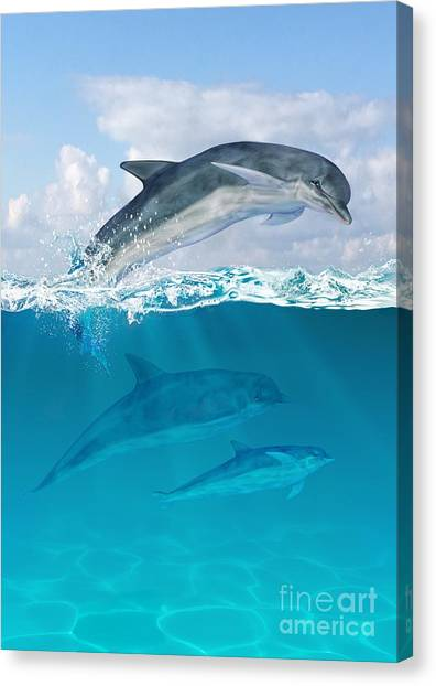 Flipper Canvas Print - Leap by John Edwards