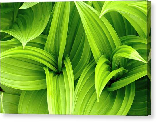 Blade Of Grass Canvas Print - Leaves Drops Green by Vladimirovic