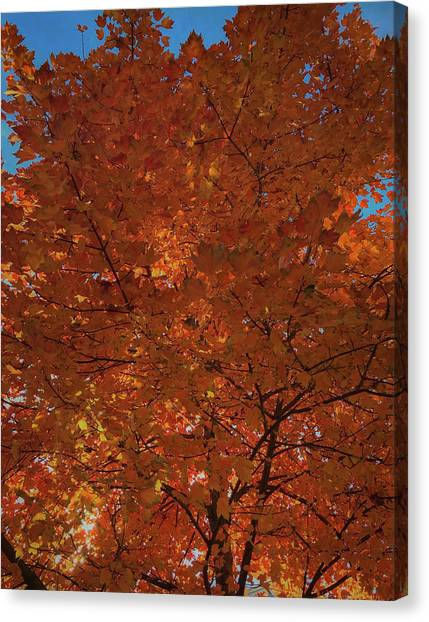 Leaves Of Fire Canvas Print