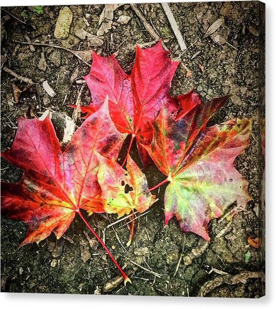 Canvas Print - Leaves On Fire by Sarah Staniszewski