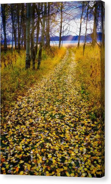 Leaves On Trail Canvas Print