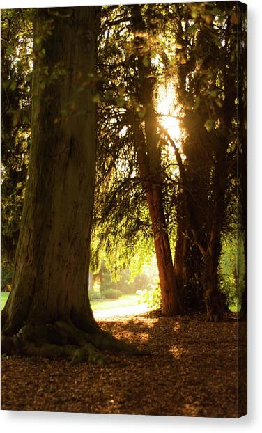 Canvas Print featuring the photograph Light Between Trees by Scott Lyons
