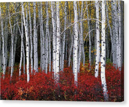 Light In Forest Canvas Print