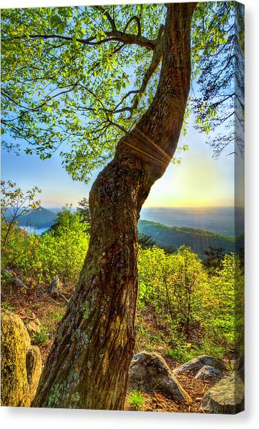 Canvas Print - Light In The Leaves by Debra and Dave Vanderlaan
