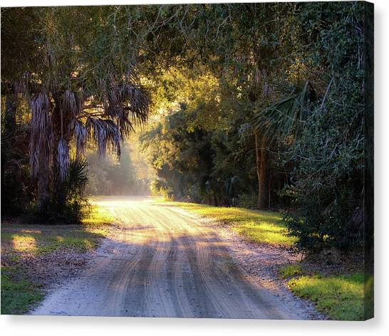 Light, Shadows And An Old Dirt Road Canvas Print