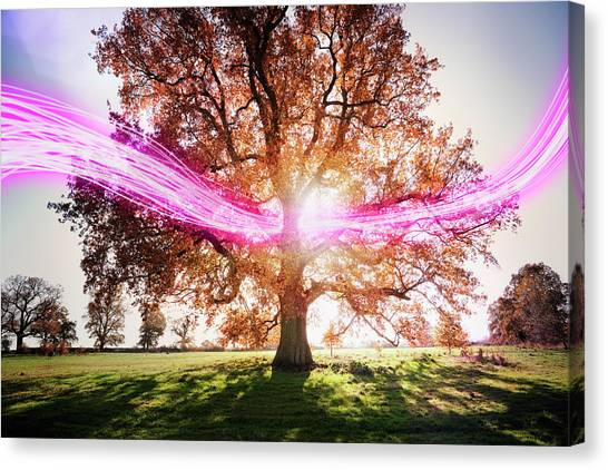 Light Trails Passing Around Tree Canvas Print by Robert Decelis Ltd