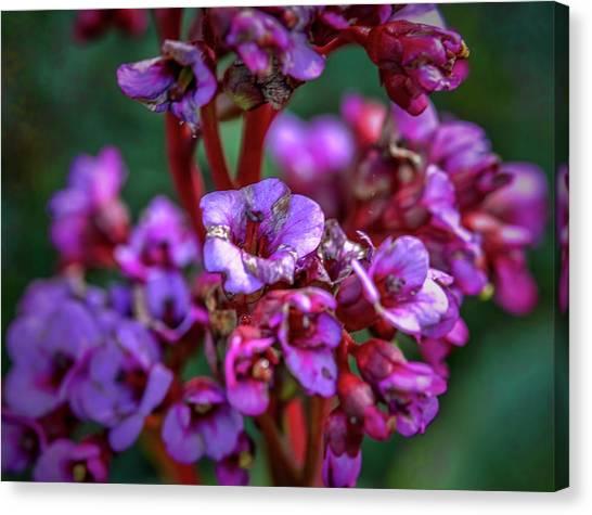 Lilac #h9 Canvas Print