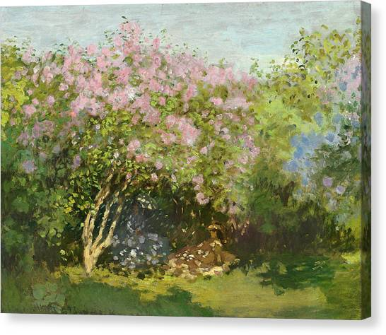 Lilac Bush Canvas Print - Lilacs In The Sun, 1873 by Claude Monet