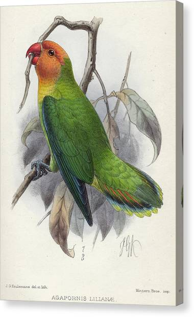 Lovebirds Canvas Print - Lilian's Lovebird by Charles John Andersson