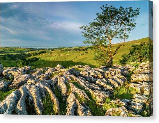Limestone Pavement, Malham Cove Canvas Print by David Ross