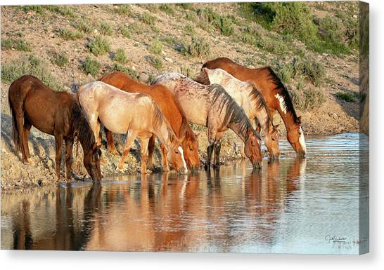 Lineup At The Pond-- Wild Horses Canvas Print