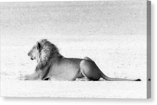 Canvas Print featuring the photograph Lion In Wait by Rand