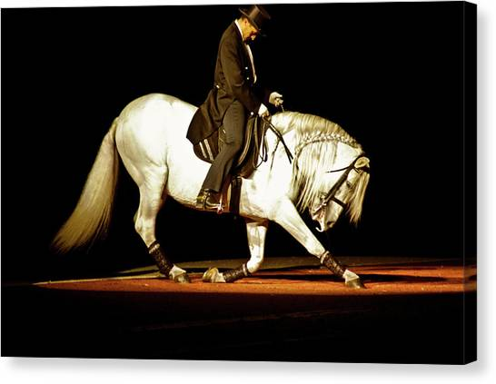 Canvas Print featuring the photograph Lipizzan by Catherine Sobredo