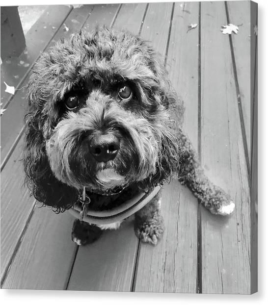 Little Charliedog  Canvas Print