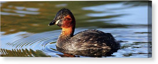 Canvas Print featuring the photograph Little Grebe In Pond by Grant Glendinning