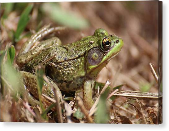 Canvas Print featuring the photograph Little Green Frog by William Selander