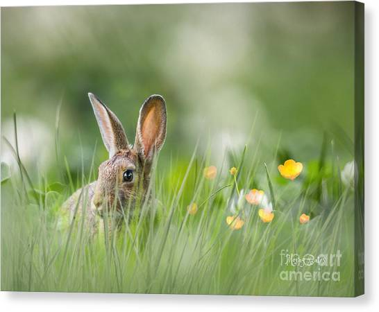 Little Hare Canvas Print