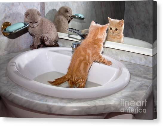 Little Kittens Bathing In The Sink Canvas Print by Vvvita