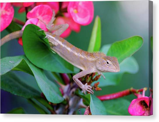 Canvas Print featuring the photograph Little Lizard by Nicole Young