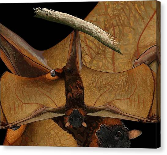 Little Red Flying Fox 2 Canvas Print