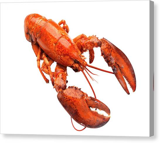 Lobster On White Background Canvas Print by Johner Images