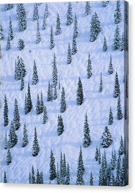 Lone Skier Amongst Trees On Slope Canvas Print