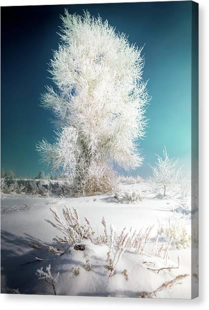 Canvas Print featuring the photograph Lone Survivor / Grand Teton National Park  by Nicholas Parker