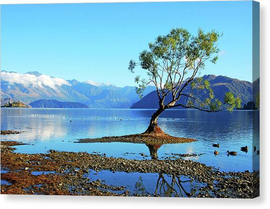 Lone Tree In Lake Wanaka By Olga Katrychenko New Zealand