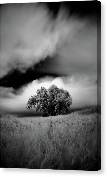 Lone Tree On A Hill Canvas Print