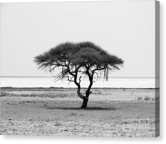 Bush Canvas Print - Lonely Acacia Tree In Etosha National by Pyty