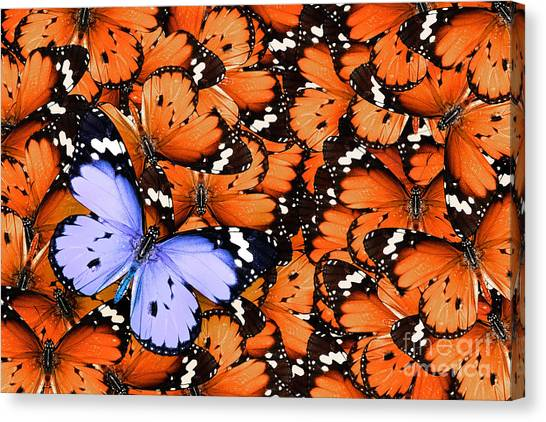 Personality Canvas Print - Lonely Lilac Butterfly Among Set Of by Protasov An