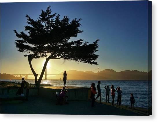 Canvas Print featuring the photograph Lonely Tree At Crissy Field by Quality HDR Photography