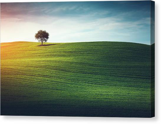 Lonely Tree In Tuscany Canvas Print by Borchee